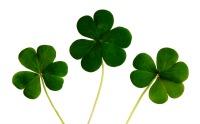 Kiss Me, I'm Irish!